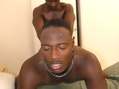 Nasty black guy gets his rump humped after blowjob